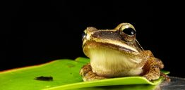 frog-173622_1920